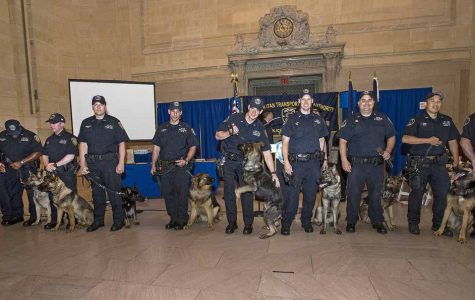 The cost of police dogs vary by breeder and the breed of the dog. They can cost up to 8,000 dollars and training for the dogs can cost around 12,000 dollars.